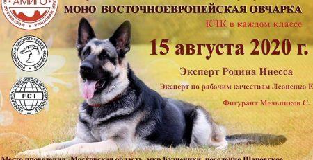 Моно восточноевропейская овчарка ЗООтехническое мероприятие 15.08.2020